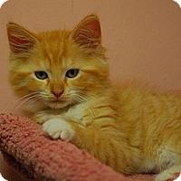 Adopt A Pet :: Emma #4 - Lunenburg, MA