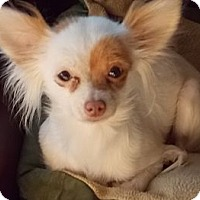 Adopt A Pet :: Rikki - San Diego, CA