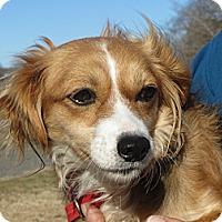 Adopt A Pet :: June Bug - Salem, NH