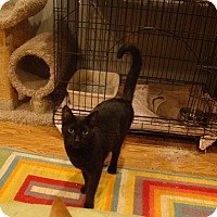 Adopt A Pet :: Mystery - Muncie, IN