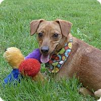 Adopt A Pet :: Fritta - Mocksville, NC