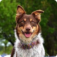 Adopt A Pet :: Monkey - Garland, TX