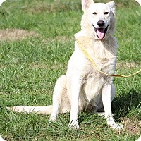 Adopt A Pet :: Bianca (bonded to Denali) - Portland, ME