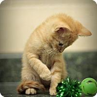 Adopt A Pet :: Calsifer - Marietta, GA