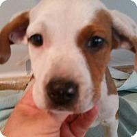 Adopt A Pet :: Kodiak - Royal Palm Beach, FL