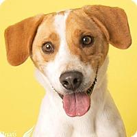 Adopt A Pet :: Henry - Roanoke, VA