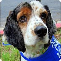 Adopt A Pet :: Schroeder - Austin, TX