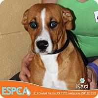 Adopt A Pet :: Kaci - Enid, OK