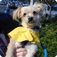 Adopt A Pet :: Eddie - Ashland, VA