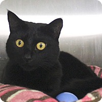 Adopt A Pet :: Lily - Middletown, CT