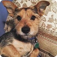 Adopt A Pet :: Jack - Brooklyn, NY