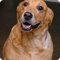Adopt A Pet :: Nyla - Pottsville, PA