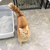 Adopt A Pet :: Ginny - Bryan, OH