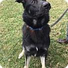 Adopt A Pet :: Triton 5442