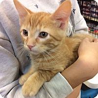 Adopt A Pet :: Carmel - Bonner Springs, KS