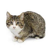 Adopt A Pet :: Savannah - Adrian, MI
