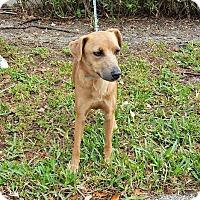 Adopt A Pet :: Athena - Maquoketa, IA