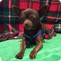 Adopt A Pet :: I1266977 - Pomona, CA