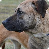 Adopt A Pet :: Stardust - East Smithfield, PA
