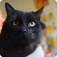 Adopt A Pet :: Severus - Baltimore, MD