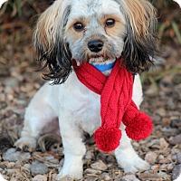 Adopt A Pet :: Buddy - Apple Valley, UT