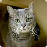Adopt A Pet :: Olive - Kettering, OH