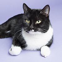 Adopt A Pet :: Tuna - Wheaton, IL