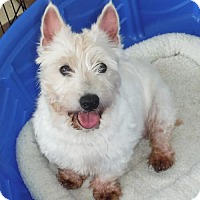 Adopt A Pet :: Jewels - Orlando, FL