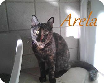 Domestic Shorthair Cat for adoption in River Edge, New Jersey - Arela