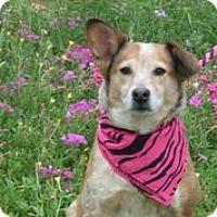Adopt A Pet :: Kinsey - Austin, TX