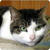 Adopt A Pet :: Stephanie - Carmel, NY