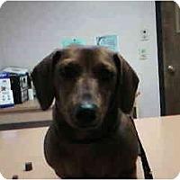 Adopt A Pet :: ADDISON - Portland, OR