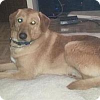 Adopt A Pet :: Dougie - Hamilton, ON