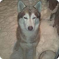 Adopt A Pet :: Mia - Belleville, MI