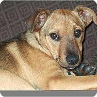 Adopt A Pet :: Alex PENDING - kennebunkport, ME