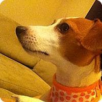Adopt A Pet :: MINIK - Scottsdale, AZ