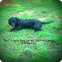 Adopt A Pet :: Rex - Gadsden, AL