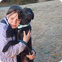 Adopt A Pet :: Tiana - Rome, NY
