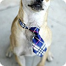 Adopt A Pet :: Jack Black