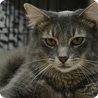 Adopt A Pet :: Aaron - Chesapeake, VA