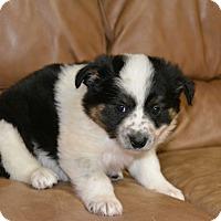 Adopt A Pet :: Matt - Meridian, ID