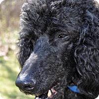 Adopt A Pet :: DAUNTE - Elk River, MN