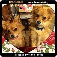 Adopt A Pet :: Foxy and Midgie - Rancho Cucamonga, CA