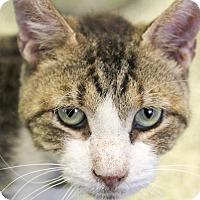 Adopt A Pet :: Frankfurter - Indianapolis, IN