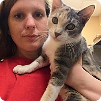 Adopt A Pet :: Petsmart McDonough Kitties - McDonough, GA