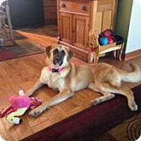 Adopt A Pet :: Kylie - Louisville, KY