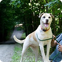 Adopt A Pet :: Reecy - Charlotte, NC