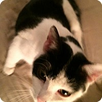 Adopt A Pet :: Olivia - ADOPTED - Livonia, MI