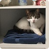 Adopt A Pet :: Luna - Philadelphia, PA