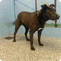 Adopt A Pet :: MILEY - San Bernardino, CA